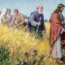 Christ in the wheat field